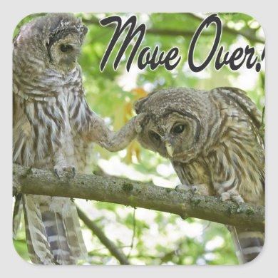 Move Over Owls Cute Square Sticker