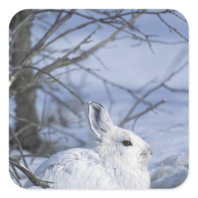 NA, USA, Alaska. Arctic National Wildlife Square Sticker